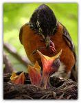 Filhotes sendo alimentada pelamãe