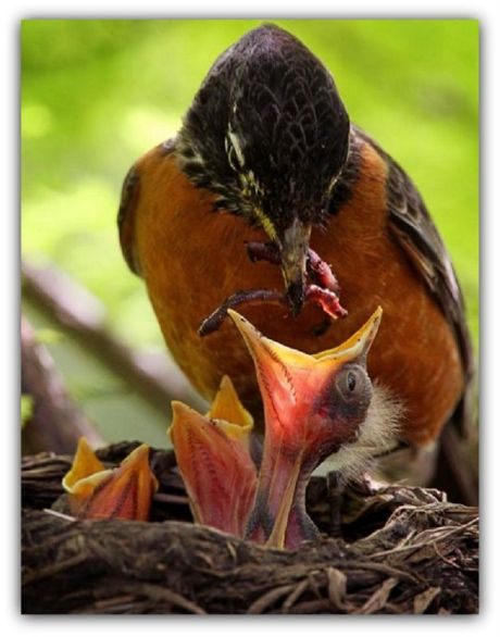 Filhotes sendo alimentada pela mãe